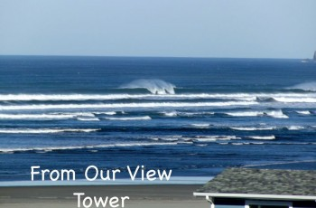 Gull Wing Inn + View Tower, Low Rates, Dogs Ok!