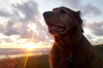Dog Friendly, 2-BD Award Winning Beach Condos
